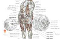 How to do a proper deadlift with barbell. Trap bar deadlift
