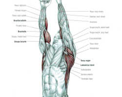 Close Grip Lat Pulldown: Video Exercise Guide & Tips